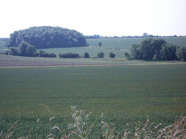 Fields near Lighthorne Rough