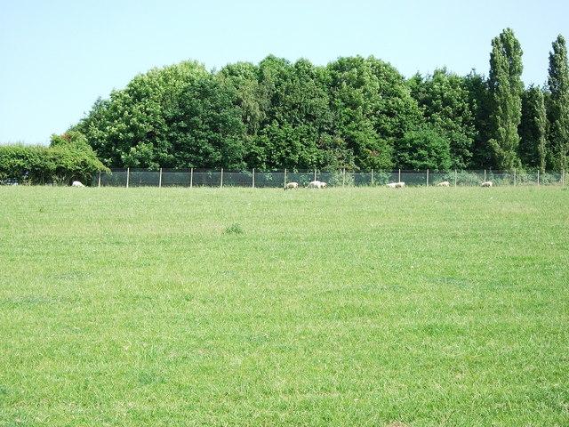 Field near Lighthorne Rough