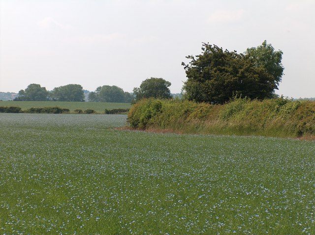 Field south of Little Warton