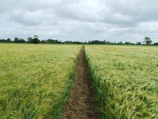 Through The Barley