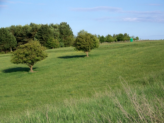 Grassland near Enford
