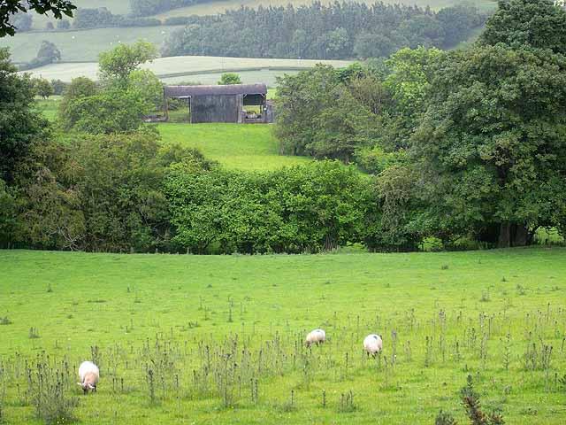 Barn at the Oak Farm