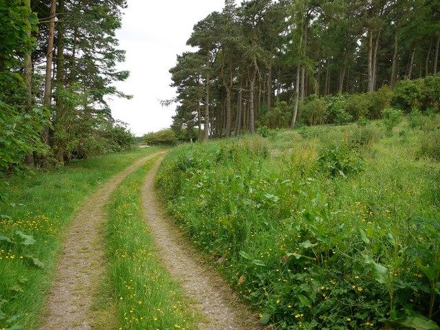 Track on south-east side of Flodden Hill