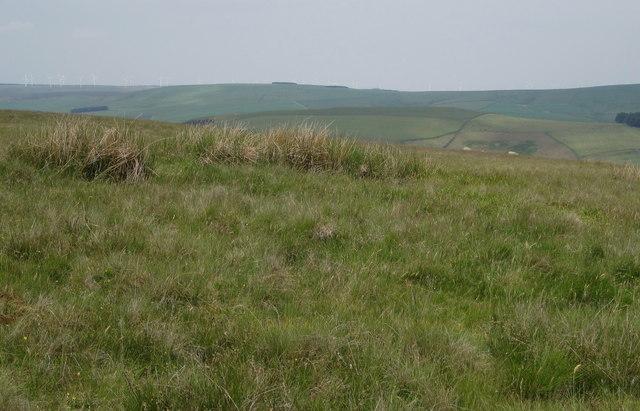 Summit of Hog Hill