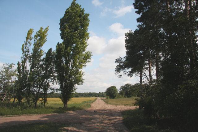Track leading to Chippenham Park