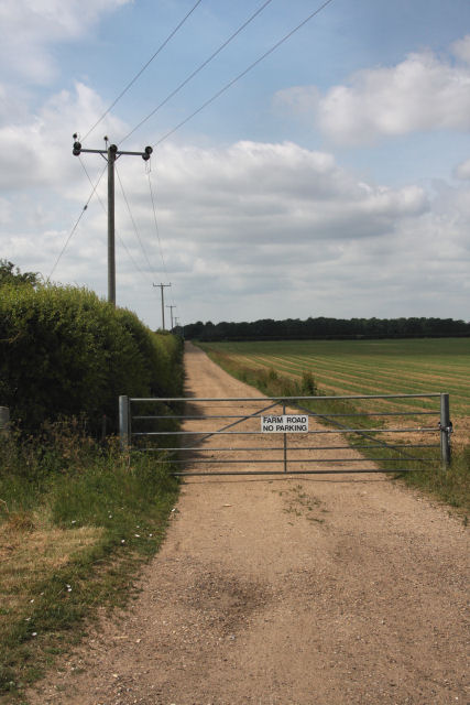 Farm road leading to Sounds Plantation