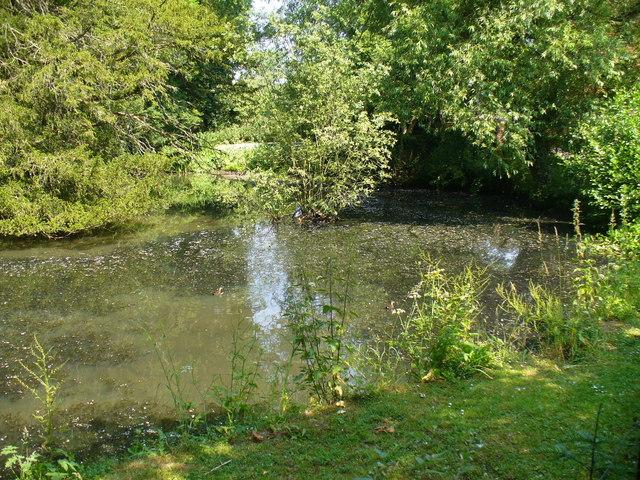 Mill Pond, Dunsfold
