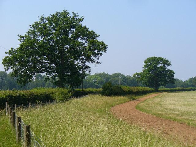 Gallops by New Pound Farm