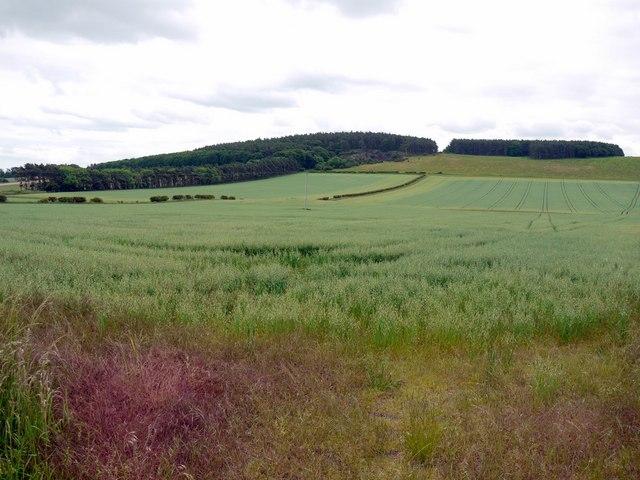 Field of oats south of Blinkbonny