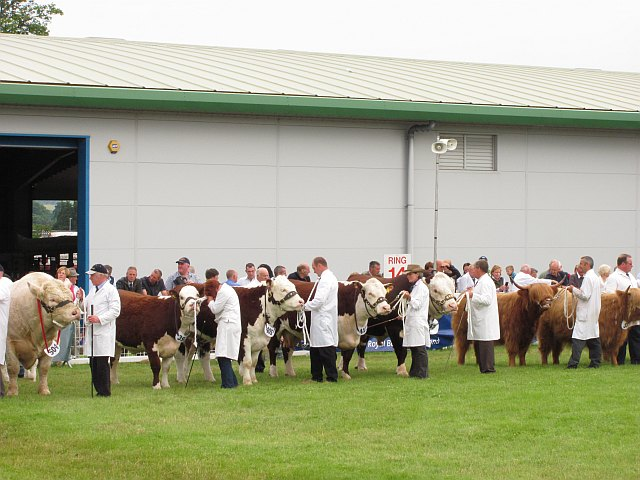 Cattle judging, Royal Highland Show