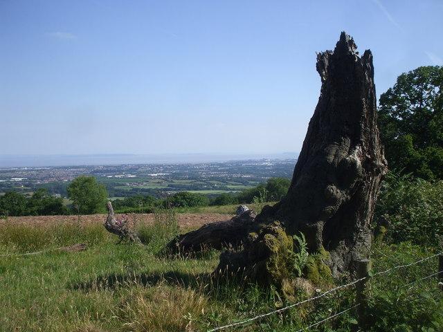Dead tree stump on Graig Llysfaen