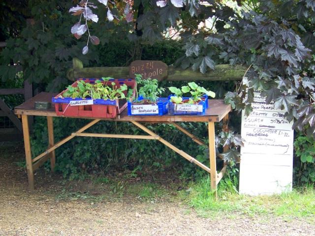 Plants for sale, Chalbury