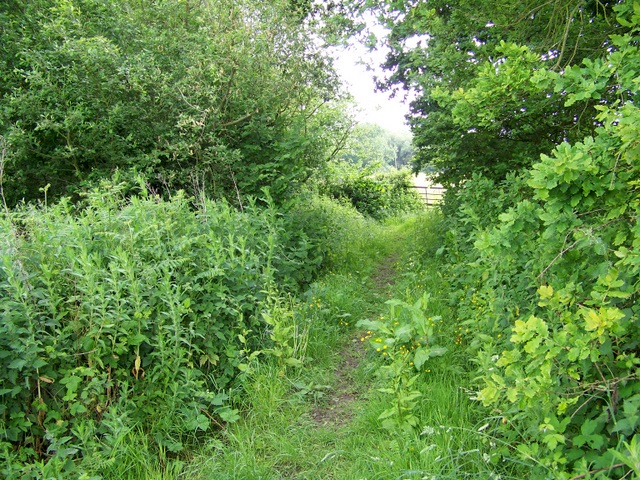 Footpath, Chalbury Common