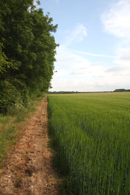 Field margin near the A14