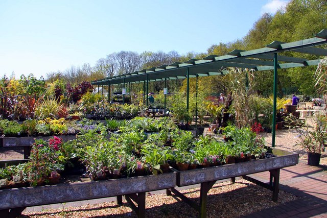 Plant stands in Dalverton Garden Centre