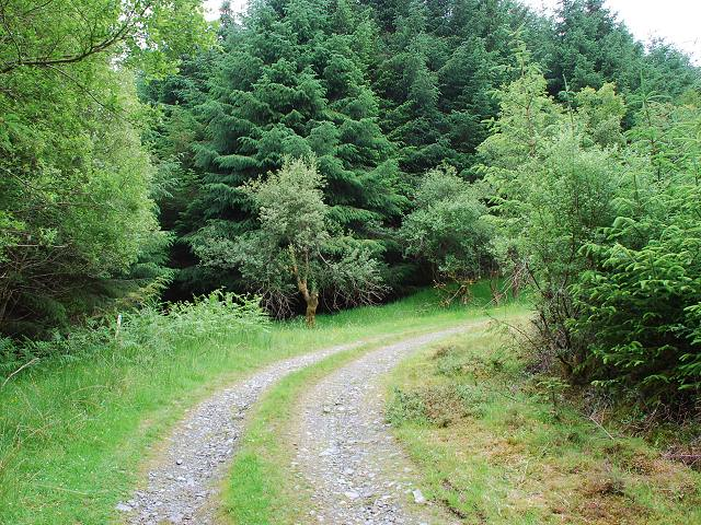 Forestry track