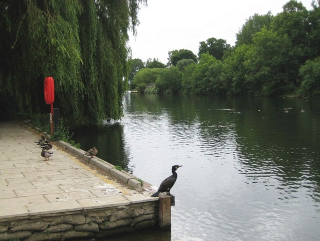 River Thames and cormorant at Staines