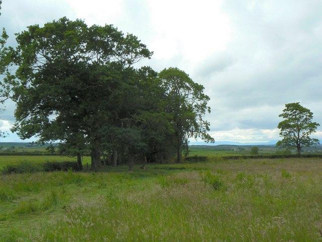 Trees near High Cross farm