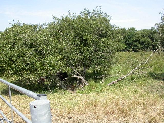 Purewell Meadows, grazing land