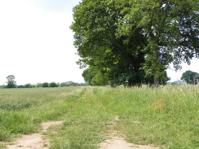 Bridleway to Marton