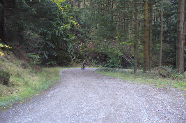 Bend in the Track, Grizedale Forest