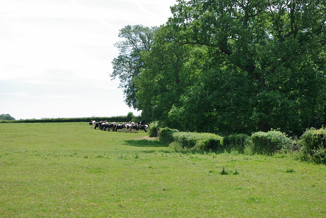 Cattle huddle by the trees