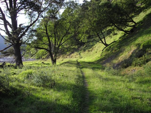 Path, Glen Feshie