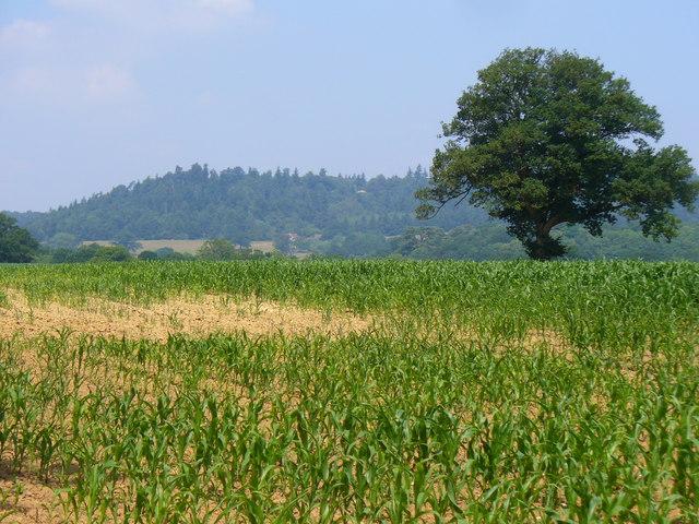 Field near High Billinghurst