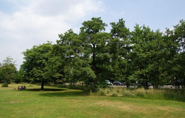 Open grassy space alongside the A1000