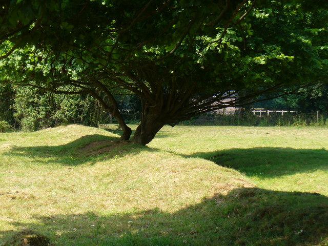 Field Boundary near High Loxley