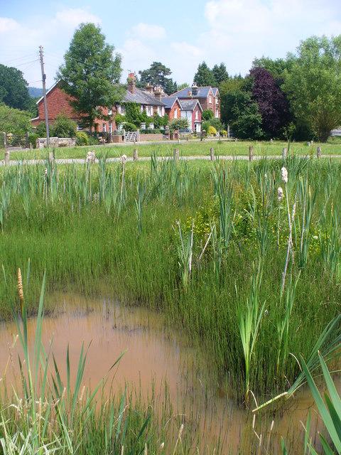Pond at Dunsfold Green