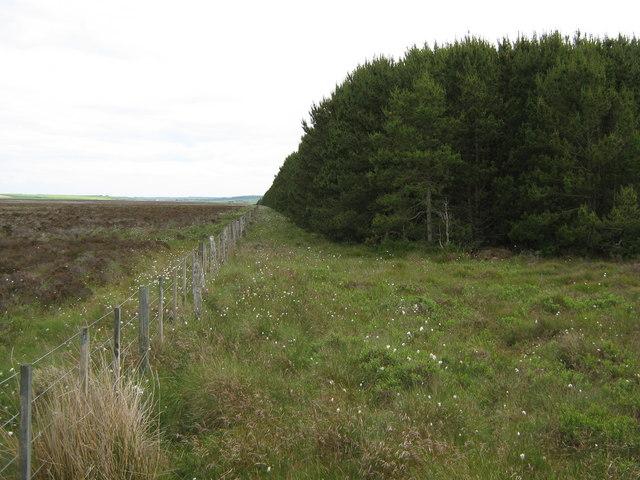 North corner of Bilbster forest