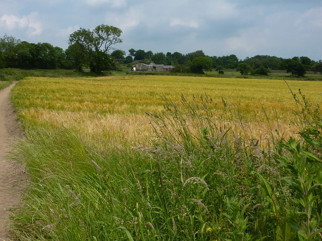 Ripening crops near Mooredge Farm