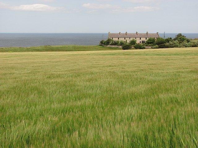 Barley, Red Heugh