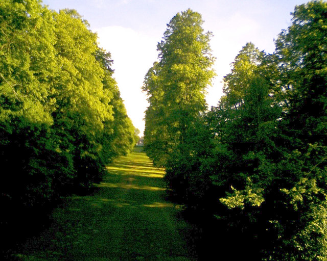 Airborne view of avenue of trees, Nowton Park