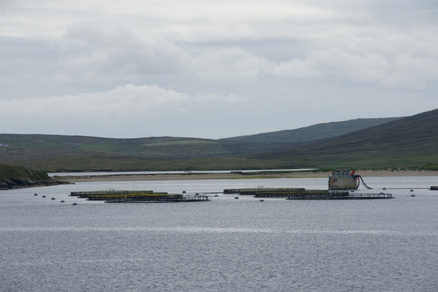 Fish farm in Wick of Vatsetter