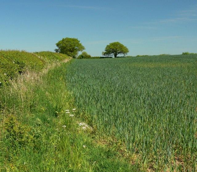 Farmland near Elmesthorpe Plantation