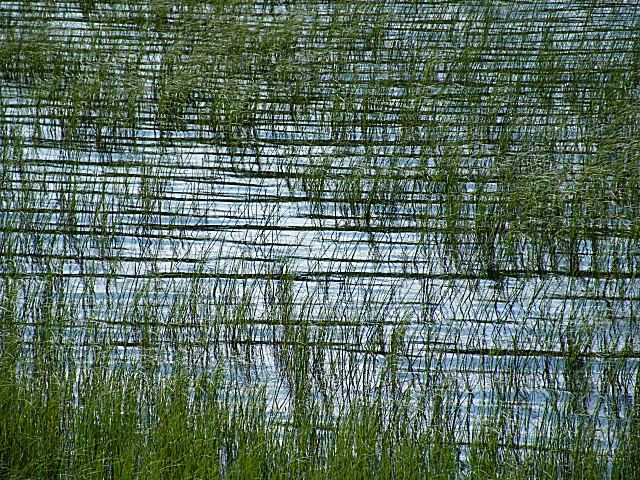 Reeds and Ripples