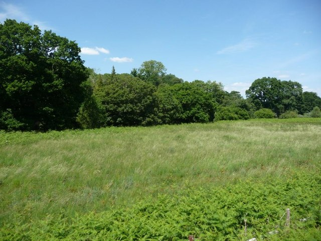 Meadow alongside the Dart