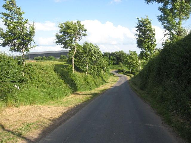 The tree-lined road to Kelloe Mains