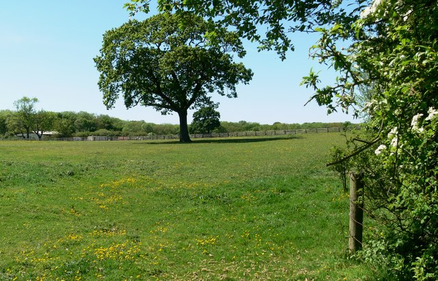 Field and tree near Freeholt Wood