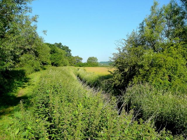 Drain on Cobney Meadows