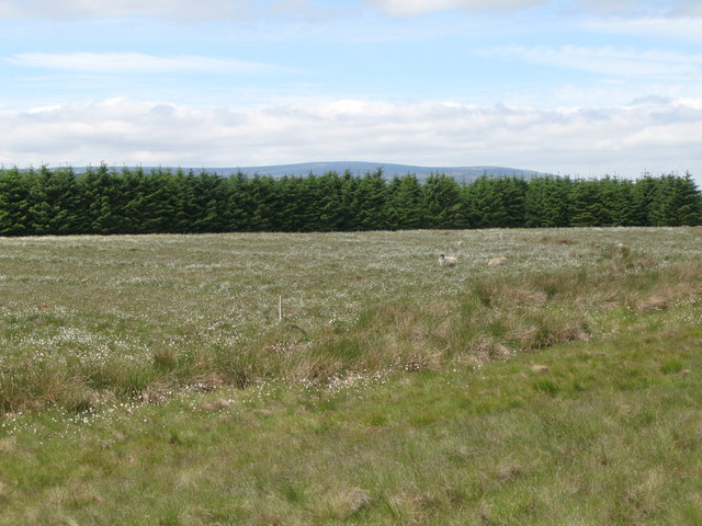 Moorland and plantation south of Clattering Causeway