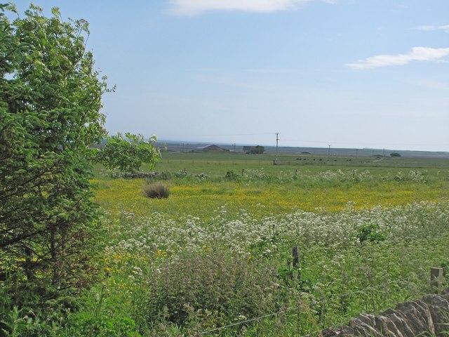 Farmland at Kirk