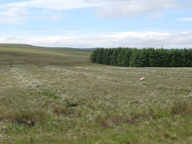 Moorland and plantation south of Clattering Causeway (2)