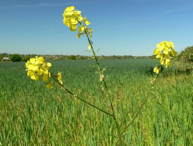 Wild flowers and farmland