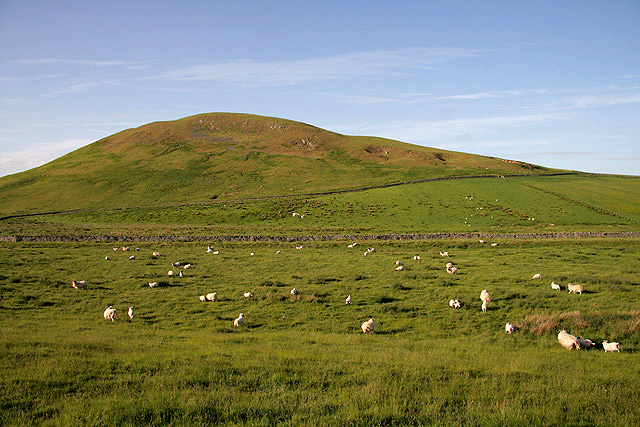 Sheep on the west side of Middlesknowes Farm