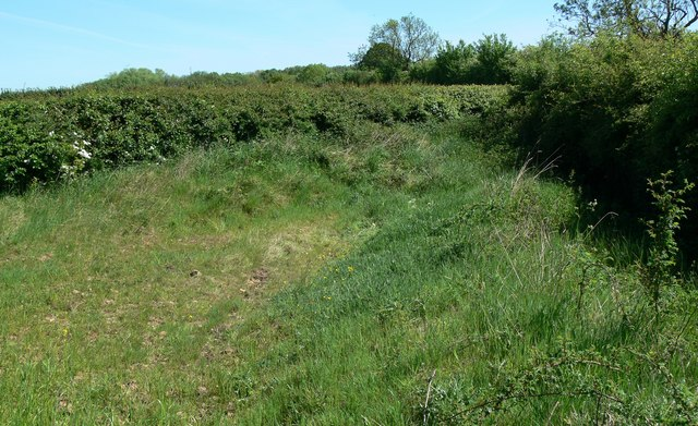 Field and hedgerows