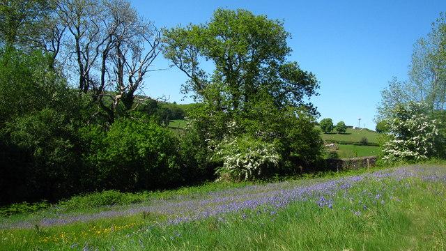 Spring on the Hillside
