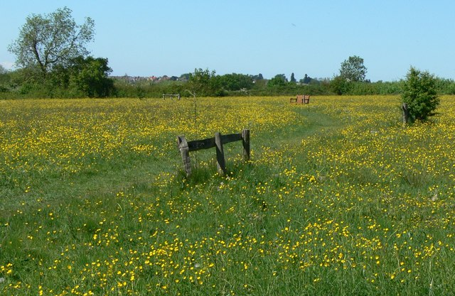 A buttercup covered Smenell Field